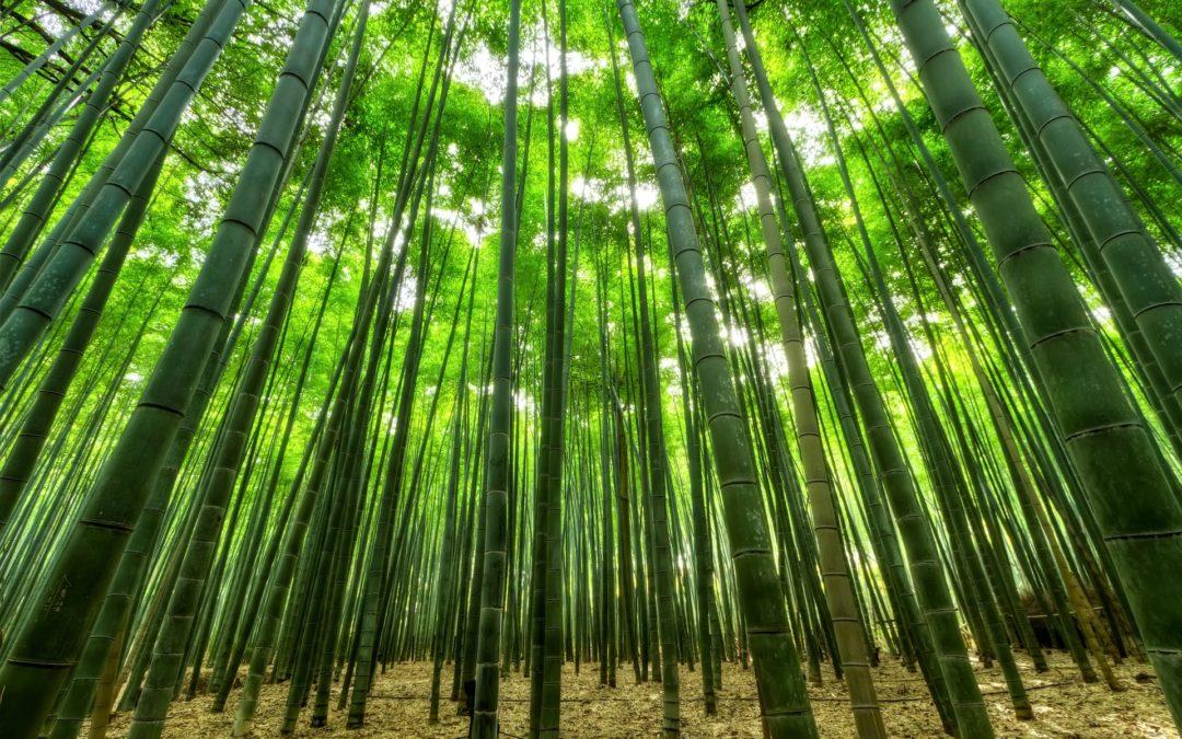 Wiki Bambou