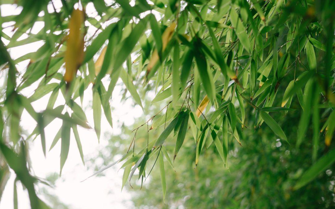 Les conseils Newfi Bamboo